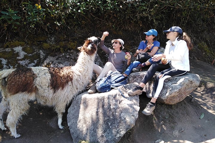 llama and family in 2 day inca trail to machu picchu
